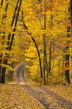 Trail at Hidden Lake Gardens (Michigan) by Julie Falk