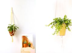 Inspiration couleur le jaune citron. pour les plantes. Des suspensions pour plante jaunes pastel, ou un cache pot jaune citron.