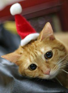 Christmas Mood oh honey!