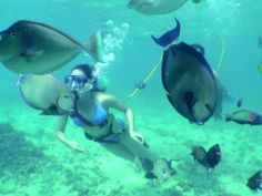 Poipu Guided Snuba Diving Tour, Kauai tours & activities, fun things to do in Kauai | HawaiiActivities.com