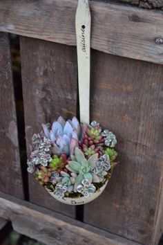 Fascinating Succulent Plants Designs You Need To Check. Having said that, here you will get some insights on many different succulent plants ideas Succulents In Containers, Cacti And Succulents, Planting Succulents, Planting Flowers, Succulent Ideas, Succulent Arrangements, Container Flowers, Container Plants, Cactus Plants
