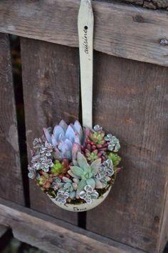 Ladle as a succulent planter