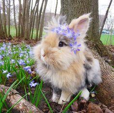 Cute Bunny Pictures, Cute Animal Photos, Animal Pictures, Bunny Pics, Fluffy Cows, Fluffy Animals, Animals And Pets, Cute Little Animals, Cute Funny Animals