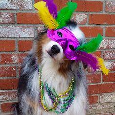 Chien Mardi Gras - Carnaval