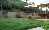 UC Verde is a sustainable and functional lawn alternative well-suited for California's dry climate. Drought Tolerant Grass, Tall Fescue Grass, Fake Lawn, Urban Heat Island, Synthetic Lawn, Perennial Grasses, Seed Germination, Small White Flowers, Weed Seeds