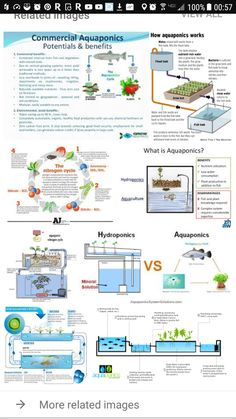 Essentially, Aquaponics is a merge of aquaculture - fish farming, and hydroponics - growing plants in a water medium, aquaponics brings you the best of both worlds. Hydroponic Farming, Aquaponics Greenhouse, Hydroponic Growing, Aquaponics Fish, Fish Farming, Aquaponics System, Vertical Farming, Aquaponics Supplies, Hydroponic Systems
