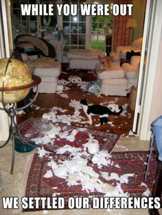 Haha! XD Don't you just love cats? I think the dog also had something to do w/ making this mess.