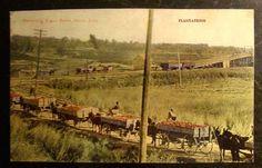 MARKETING SUGAR BEETS, DELTA, COLORADO, Photograph