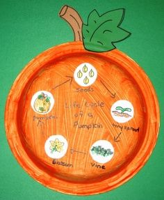 pumpkin science for kindergarten | This is a neat wear to display the pumpkin life cycle. :) Jodi from ...