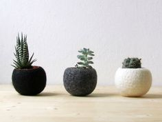 Felt succulent planter / felted pod / Succulent terrarium / Concrete color felt vases / felt bowl / minimalist decor on Etsy, $55.00