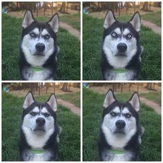 Chú chó với khuôn mặt khinh bỉ cả thế giới trở thành hiện tượng trên Instagram - Ảnh 5.