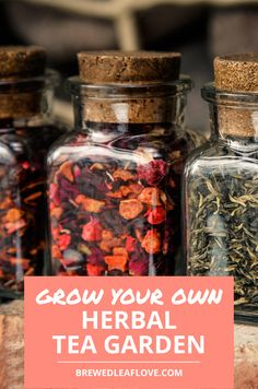 Which herbs should you plant to grow your own herbal teas in your own herbal tea garden? What plants grow easily and make the best herbal teas. Making Herbal Tea, Best Herbal Tea, Organic Herbal Tea, Herbal Teas, Ginger Root Tea, Hot Tea Recipes, Parsley Tea, Tea Organization, Rosehip Tea