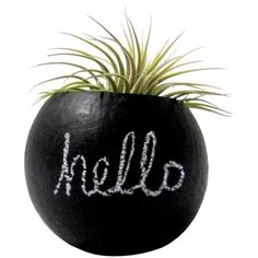 Dot & Bo Chalk it Up Air Plant ($15) ❤ liked on Polyvore featuring home, home decor, floral decor, fillers, plants, black, decor and black home decor