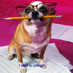 Study dog has proof