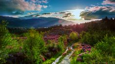 Magic path Scotland [OC] [1920x1080] #nature #beauty