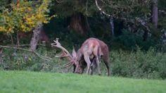 Jagd im Gesäuse  -  Bergauf Bericht Horses, Animals, Hunting, Alps, Landscape, Nice Asses, Animaux, Horse, Animal