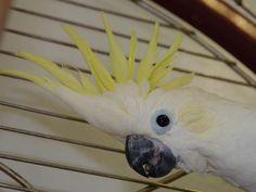 Vogelspezialist
