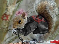 squirrel with pink mohawk