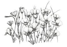 Artwork: Californian Poppies Giclée Print - Open House Art
