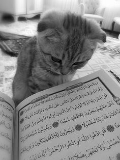 cat listening to the Quran Quran Wallpaper, Islamic Quotes Wallpaper, Cute Animal Quotes, Cute Animals, Muslim Quotes, Arabic Quotes, Beautiful Quran Quotes, Islamic Cartoon, Anime Muslim