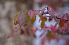 Phillip  Oliver | Flickr - Photo Sharing!  -  n10 |