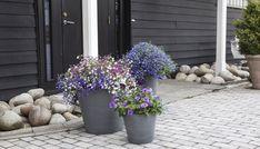 I store potter og krukker holder jorden bedre på fuktigheten, og du slipper å vanne så ofte.