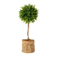 August Grove Myrtle Topiary Ball in Pot (Set of 2) Size: 2