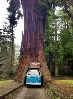 Chandelier Drive Thru Tree with 1951 Chevy - This is probably not ...