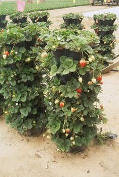 Vertical Vegetable Gardening Ideas Vertical Vegetable Gardening Ideas Tips for Growing Produce in a Vertical Garden When someone mentions home gardening, what is the first thing that comes to mind? A large empty plot of land that has been Read Herb Garden, Lawn And Garden, Garden Beds, Vertical Vegetable Gardens, Vegetable Gardening, Kitchen Gardening, Pot Jardin, Plantation, Edible Garden