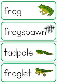 Kindergarten Inquiry, Preschool Science, Science Experiments Kids, Science For Kids, Activities For Kids, Preschool Ideas, Lifecycle Of A Frog, Frog Life, Biology Lessons