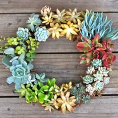 How to Make a Succulent Wreath   (I really want to try this. Looks very easy)