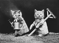 Cats and Dogs Dressed as People, 100 Years Ago - The Atlantic