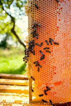 Learn how to pick the perfect beehive location, what basic equipment you need and more in this excerpt about beekeeping for beginners.data-pin-do=