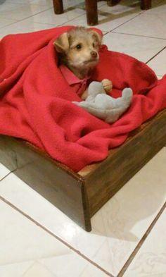 Cama para perro pequeño hecha con un cajon y una almohada envuelta en una cobijita