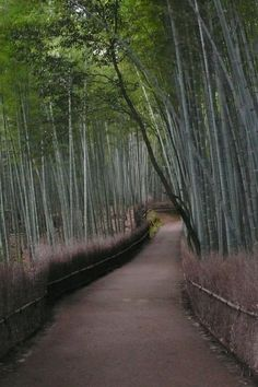 Arashiyama in Kyoto, Japan is a magical destination-- walking through the bamboo groves is a great alternative for a romantic honeymoon.