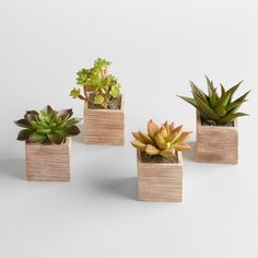Our Mini Succulent Pots look incredibly realistic - they're just like real…