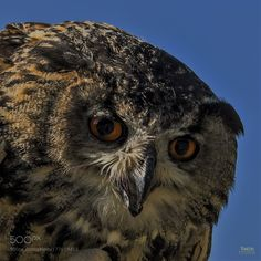 See you by RONSHI-FOTOGRAFIE #animals #animal #pet #pets #animales #animallovers #photooftheday #amazing #picoftheday