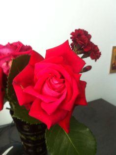 Trandafiri...
