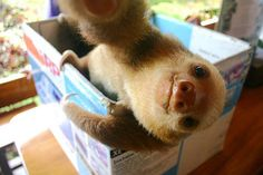 You'll never believe these crazy animal selfies. Check out our top five favorite animal selfies of all time! Baby Sloth, Cute Sloth, Selfies, Baby Animals, Funny Animals, Cute Animals, Small Animals, Funny Good Morning Memes, In This World
