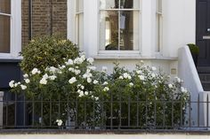 In a city, a front garden may be nothing more than a narrow strip of land to separate a house from the curb. Here are 9 ideas to make the most of a small space, from the editors of Gardenista. Landscaping Around House, Front Yard Landscaping, Curb Appeal Uk, Landscape Design, Garden Design, New Zealand Landscape, Landscaping Company, Luxury Landscaping, Landscaping Ideas