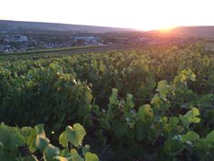 Sunset from the vinyards of Epernay