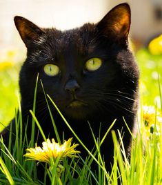 Image result for black cats in the garden