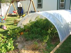 how to grow bean in hoophouse - Google Search