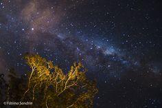 Via Láctea sobre árvores