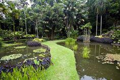 Sítio Roberto Burle Marx: o encanto da flora brasileira Alô, Rio de Janeiro - Turismo, cultura e eventos