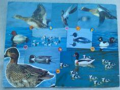 collage van eenden