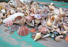 Treasures from the Sea.  I think I have all of these!! Love seashells!