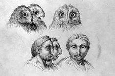 """These bizarre sketches were made by French painter and art theorist Charles Le Brun – who was declared by King Louis XIV as """"the greatest French artist of all time"""". Ramones, Bird People, Cool Face, Louis Xiv, Human Emotions, Animal Faces, French Artists, Fantasy Creatures, 17th Century"""