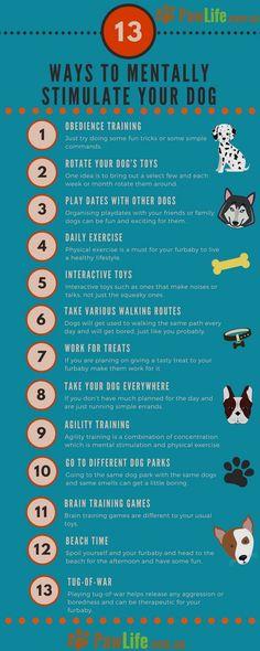 Basic Dog Training - CLICK PIC for Many Dog Care and Training Ideas. #doglovers #dogtrainingideas