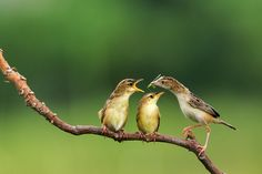 Feeding time by Cherly Jong on 500px
